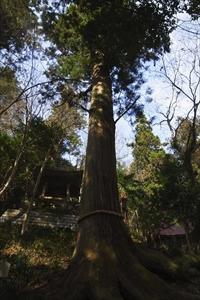 一度車道に出て正面に大きな杉の...
