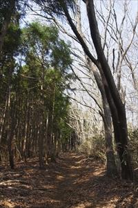 右側が広葉樹林帯、左が針葉樹(...