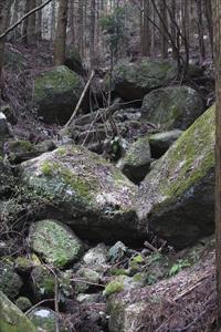 岩がゴロゴロ〜。岩に付いた苔が...