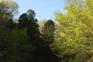 木々も色づき始めています。...