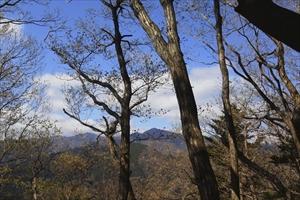 丹沢の山々もよく見える。...