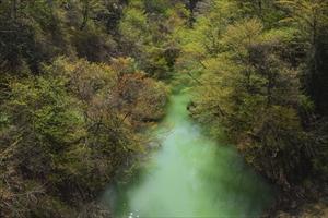 新緑がキレイ! 紅葉の時期にも...
