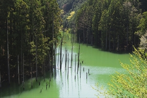 本当に緑だな・・・。...
