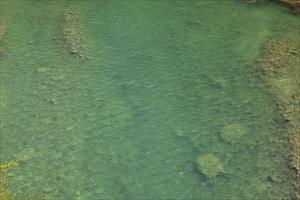 コッチの沢の水も緑・・・。...