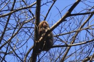 木の上の猿です。20〜30頭く...