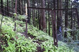 鹿柵。むしろヒル柵が欲しい・・...