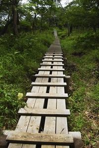 ・・・木道が整備されている。...