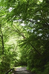 ・・・緑の回廊をくぐる・・・。...