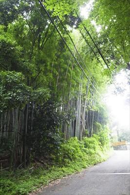 竹林を抜けて少し歩くと・・・...