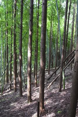 この辺の植林地はキレイに並べて...