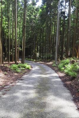樹林帯の中を進むも、やがて・・...