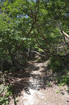 乗鞍岳へと続く稜線に乗ったので...