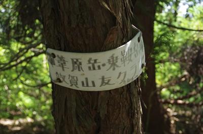 とここで振り返ったら木になにや...