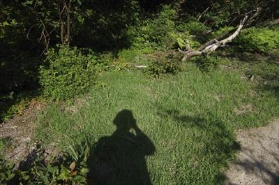 登山道脇の草地。ここは気持よさ...
