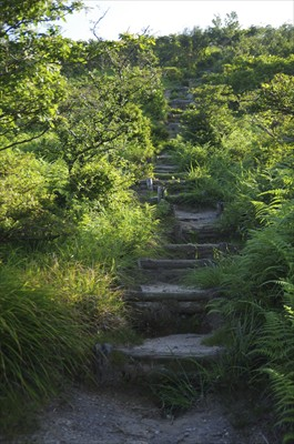 赤坂山への最後の登り。それほど...