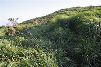・・・背の高い草のせいで先も見...
