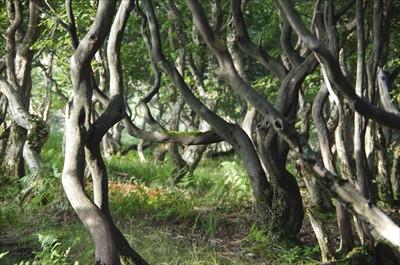 樹の幹がウニャウニャ・・・。...