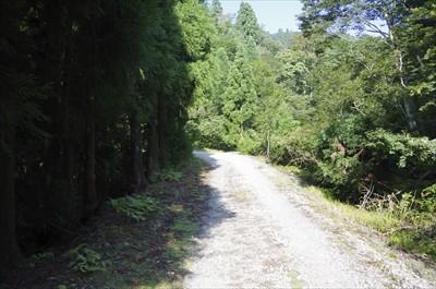 ちょっとの林道歩き、久しぶりの...