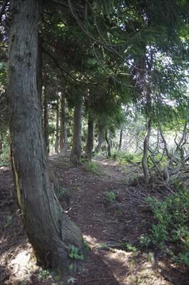 やっと樹林帯の中に入ったか??...