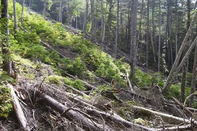 やたら倒木が多い所があった。...