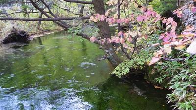 清水川。水面に映った緑がキレイ...