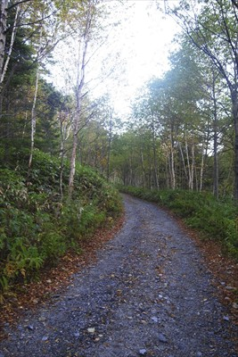 さぁ、気を取り直して林道を進む...
