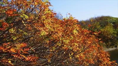 ナナカマドの紅葉がキレイ。...
