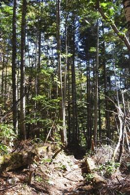 樹林帯突入。...