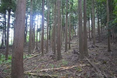 それにしても、この辺の樹木はよ...