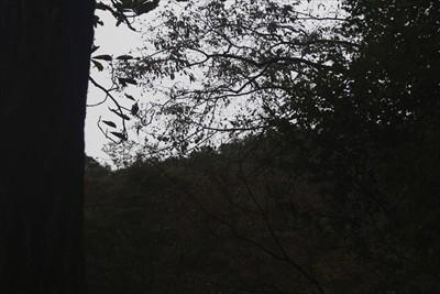 ふと見あげれば山頂の展望台が見...