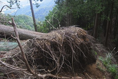 大きな倒木があります。以前来た...
