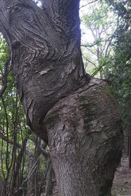 山頂のネジネジの木。...