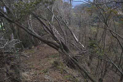 降り始めてすぐに倒木地帯に突入...