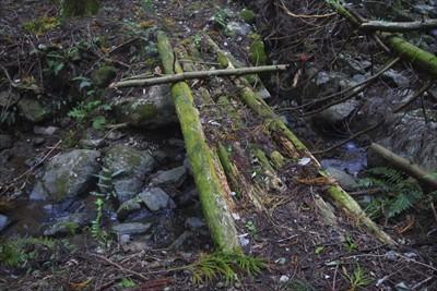 木橋を渡る・・・。でも、所々腐...