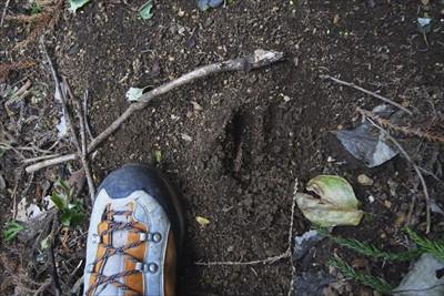 なんか、でっかい獣の足跡が点々...