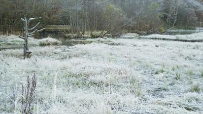 草木に霜がついて真っ白・・・。...