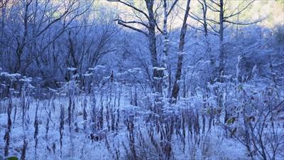 ここだけ見ると冬景色だね・・・...