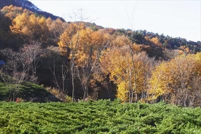 この辺りはまだ黄葉が楽しめます...