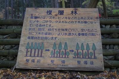 【複層林】・複層林とは、スギ、...
