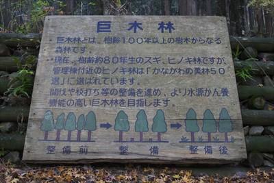 【巨木林】・巨木林とは、樹齢1...
