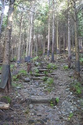 ・・・一度稜線近くまで登る。...