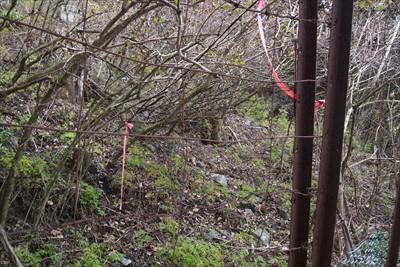 鹿柵の向こう側にピンクテープが...