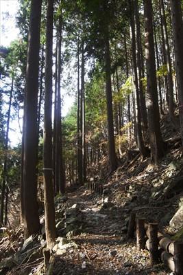 気持ちのいい樹林帯歩き。...