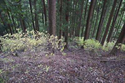 なんかうす緑の葉が群生している...