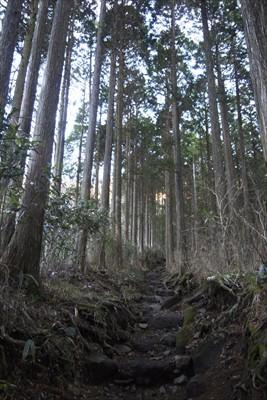 しばらくはヒノキの植林地を歩き...