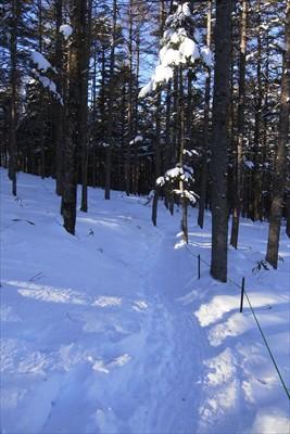 初めは樹林帯の中を歩く。...
