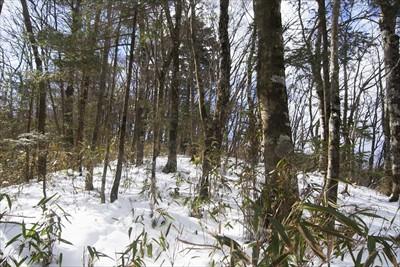 笹の密集地帯を抜けてひと登りす...