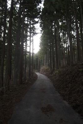 しばらくは林道を進む。両側は植...