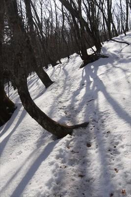 この辺の雪は柔らかいので歩きや...