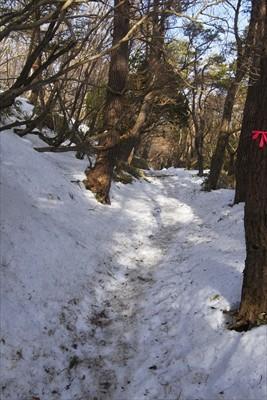 雪が適度にあるおかげで段差が無...